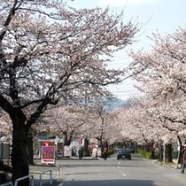 【長瀞の桜】