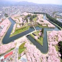 五稜郭の桜(1600本)