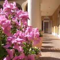 ホテル中庭のお花
