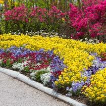 フラワー&ガーデン:お花の協奏曲
