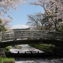 護国神社の桜(当館より徒歩2分)