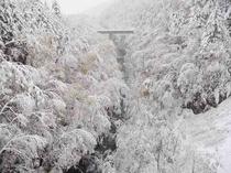 ブルーリバー 樹氷
