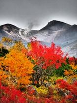 紅葉(望岳台周辺)9月下旬