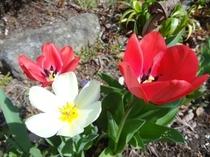 施設内に咲くお花たち