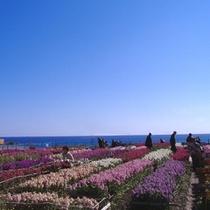 春のお花畑