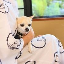 小型犬と一緒に温泉宿にお泊り