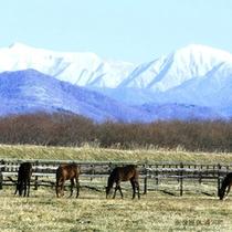 牧場の冬 画像提供「浦河町」