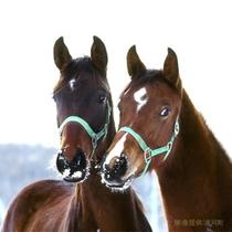 牧場の冬 馬たちの様子 画像提供「浦河町」