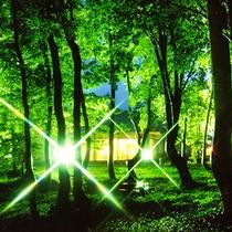 *【当館周辺ライトアップ】夜には幻想的な光景をお楽しみ頂けます。