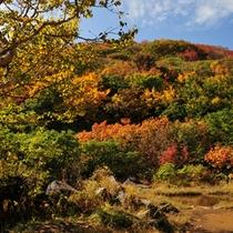 *【鳥海山登山口・紅葉】紅葉真っ盛りの鳥海山登山口。
