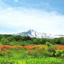 *【桑の木台湿原】鳥海山を望みながらのトレッキング!