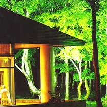 *【当館周辺ライトアップ】暗闇の中に浮かび上がる、鮮やかな緑…幻想的な光景をお楽しみ下さい。