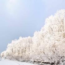 *白銀の世界が広がる美しい景色。