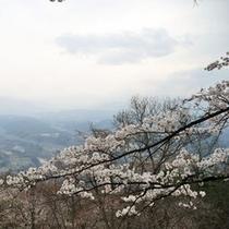 美の山の桜(4月中旬〜下旬)お車で約45分
