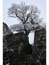 雪に包まれた福岡城址 提供:福岡市