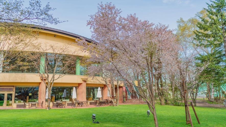 ■ホテル中庭の桜