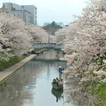 □松川公園【日本さくら名所100選】