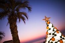 柚子クリスマスイメージ