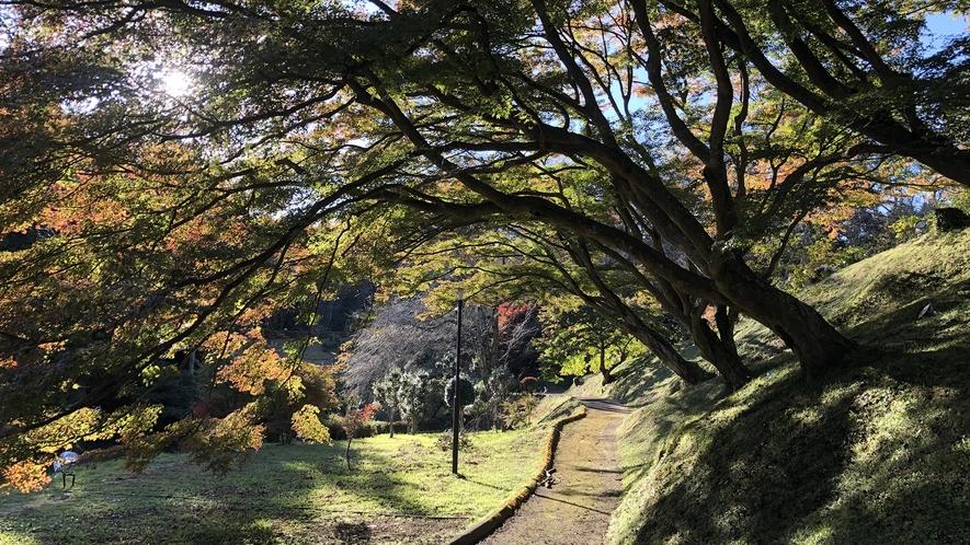 【近隣観光地】御殿山公園(紅葉)