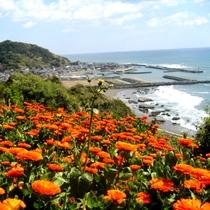 浅間山からの漁港