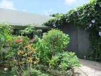 庭と建物外観(夏期)