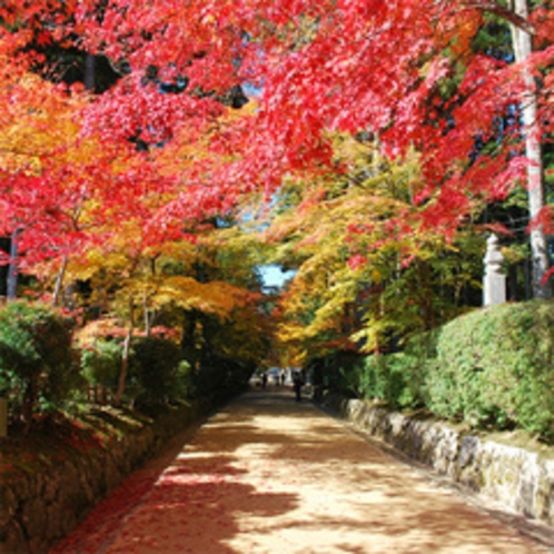 【高野山の紅葉】清々しい空気の中、美しい紅葉を観賞して心癒される一時