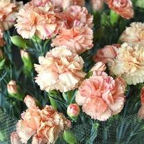可愛いお花の特典