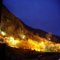 梅の宴【湯河原梅林】ライトアップ