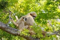 ときわ公園のお猿さん