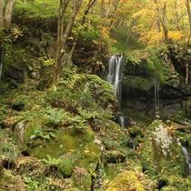 *【周辺/たまだれ(玉簾)の滝】源泉は、嬬恋村の水道にもなっている清浄な水です。
