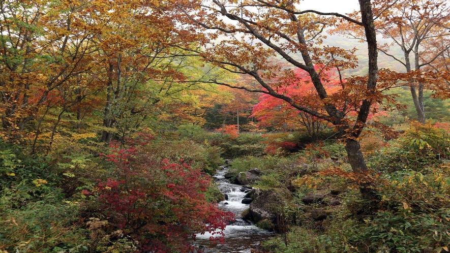 *【周辺/たまだれ(玉簾)の滝】湧き水が溢れ、小さな小川が連なっています。