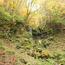 *【周辺/たまだれ(玉簾)の滝】苔むした岩から雫のような水が落ちる清らかな滝です。