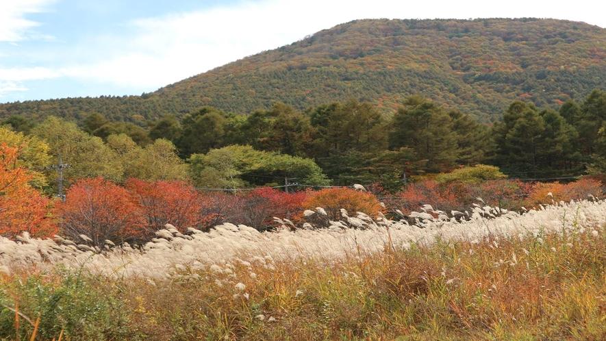 *【周辺/紅葉】当館の近くにも紅葉スポットが満載です。当館より徒歩10分・車で2分ほど