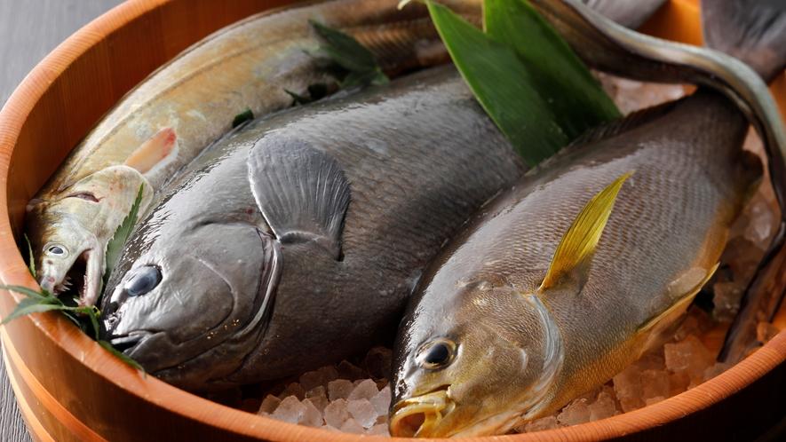 【食材】イサキ、グレ、鱧などの地魚