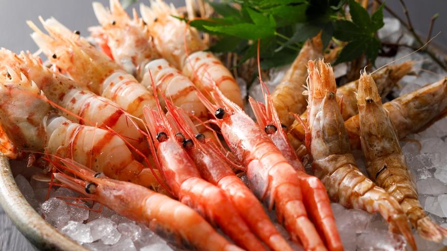 【別注料理】鬼海老などの希少食材を含めた海老のお造り盛り合わせ