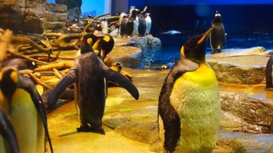 ◆市立しものせき水族館【海響館】ペンギン村