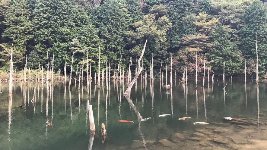 ◆一の俣桜公園(豊田)