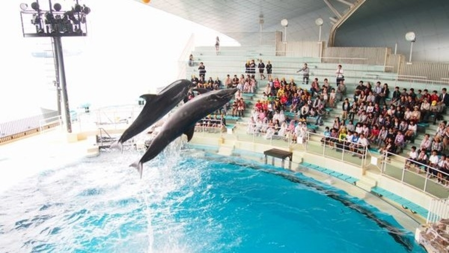 ◆市立しものせき水族館【海響館】イルカショウ