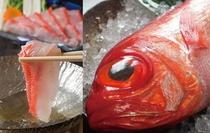 特に脂がのって甘みの強い地金目鯛