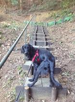 裏山へ!上り階段