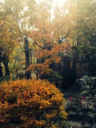 紅葉の景色1