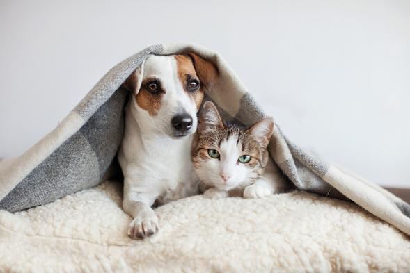ペットと一緒にシタディーンに泊まろう!