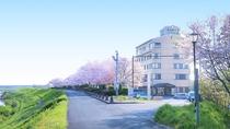 【周辺】桜