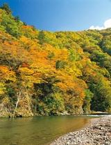 秋の赤石渓流