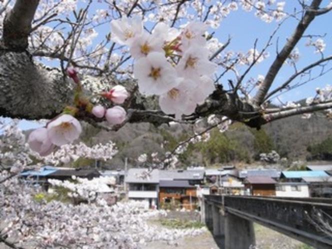 乙父集落の桜2
