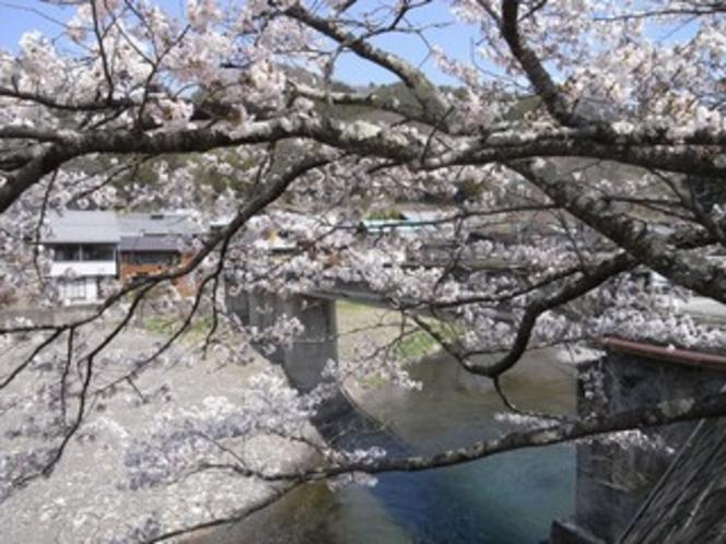 乙父集落の桜1
