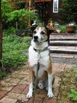 我が家の愛犬 『プクジ』