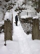 冬の楢の木の吊り橋