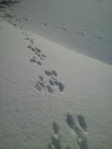 ウサギの足跡♪