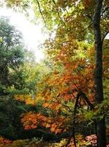 ならのき吊り橋の紅葉。